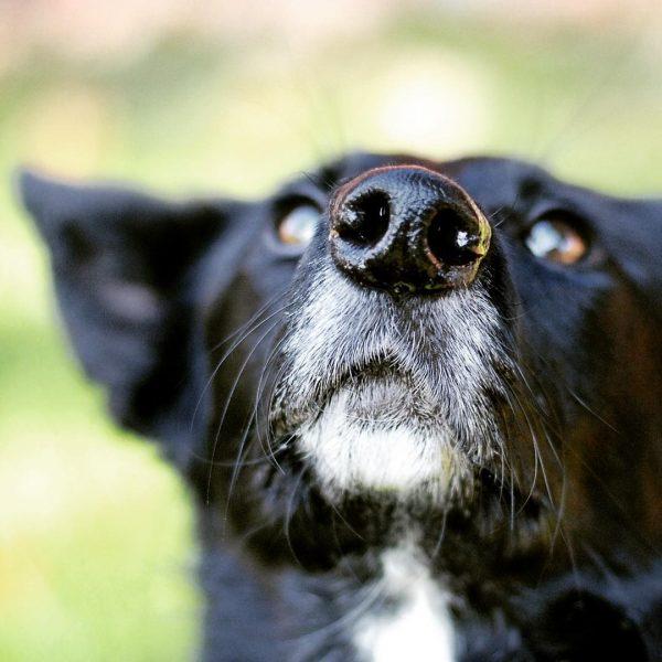 Plädoyer für eine grüne Welle im Hundetraining