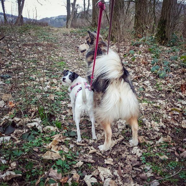 Zwei angeleinte Hunde stehen nebeneinander.