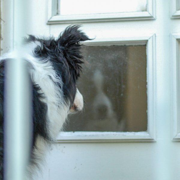 Ein Hund steht vor einer Glastür und schaut in sein Speigelbild.