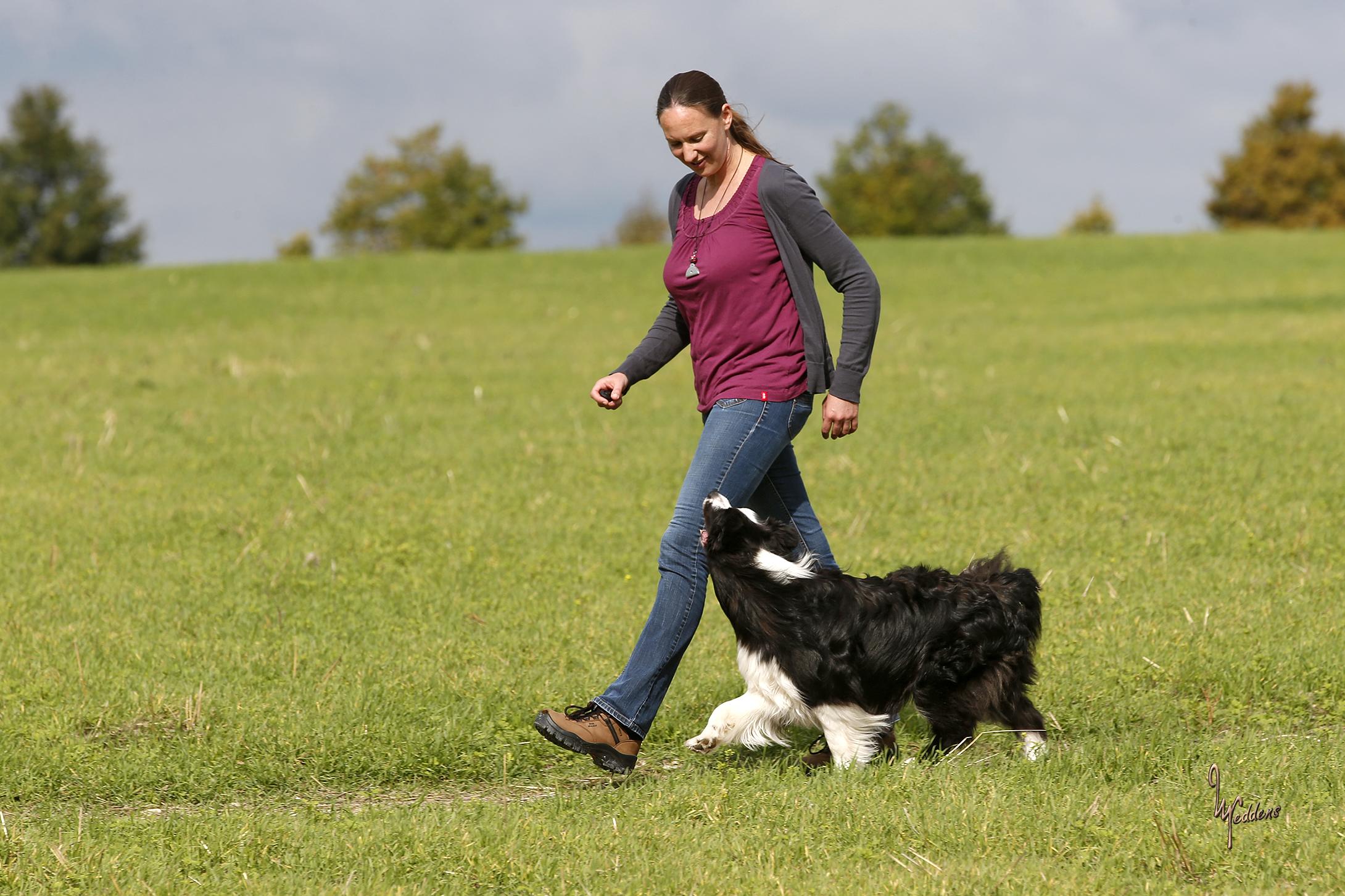 Ein Hund geht neben einer Frau bei Fuß.